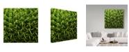 "Trademark Global Incredi 'Green In A Square' Canvas Art - 18"" x 18"""