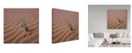 "Trademark Global Jason Matias 'Green Grass Sprout Square' Canvas Art - 14"" x 14"""