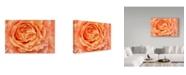"Trademark Global Cora Niele 'Orange Rose Close Up' Canvas Art - 19"" x 12"""