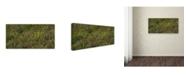 "Trademark Global Kurt Shaffer 'Ohio Meadow in Bloom' Canvas Art - 24"" x 47"""
