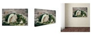 "Trademark Global PIPA Fine Art 'Seaweed and Shells' Canvas Art - 30"" x 47"""