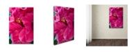 "Trademark Global Kurt Shaffer 'Hibiscus Love' Canvas Art - 30"" x 47"""