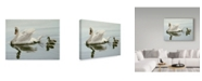 """Trademark Global Ron Parker 'Mute Swan And Three Cygnets' Canvas Art - 24"""" x 32"""""""