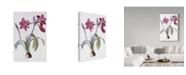 "Trademark Global Pierre-Joseph Redoute 'Amaryllis Brasiliensis' Canvas Art - 30"" x 47"""