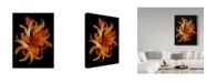 "Trademark Global Susan S. Barmon 'Day Lilies' Canvas Art - 35"" x 47"""