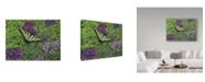 """Trademark Global Jan Benz 'Serendipity Butterfly' Canvas Art - 32"""" x 24"""""""