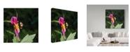 """Trademark Global Kurt Shaffer 'Packing Pollen' Canvas Art - 35"""" x 35"""""""