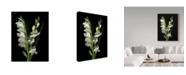 "Trademark Global Susan S. Barmon 'Gladiola 2' Canvas Art - 14"" x 19"""