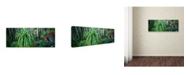 "Trademark Global David Evans 'Pandani Grove-Tas' Canvas Art - 19"" x 6"""