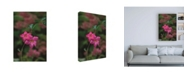"Trademark Global Kurt Shaffer Photographs Mandevilla against Hydrangea Canvas Art - 27"" x 33.5"""