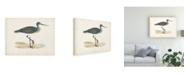 "Trademark Global Morris Morris Sandpiper III Canvas Art - 19.5"" x 26"""