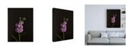 "Trademark Global Renee W. Stramel Dark & Dreamy I Canvas Art - 36.5"" x 48"""