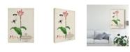 "Trademark Global Vision Studio Canna and Dragonflies II Canvas Art - 20"" x 25"""