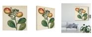 "Trademark Global Vision Studio Garden Bounty I Canvas Art - 27"" x 33"""