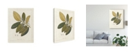 "Trademark Global Wild Apple Portfolio Botanical Heritiera V2 Canvas Art - 20"" x 25"""