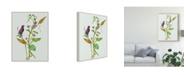 "Trademark Global Melissa Wang Metaplexis Japonica I Canvas Art - 20"" x 25"""