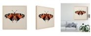 "Trademark Global Melissa Wang Butterfly Study V Canvas Art - 15"" x 20"""