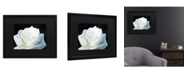 "Trademark Global Kurt Shaffer White Rose II Matted Framed Art - 15"" x 20"""