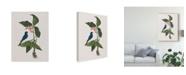 "Trademark Global Mark Catesby Studies in Nature III Canvas Art - 20"" x 25"""