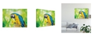 """Trademark Global Lois Bryan Blue and Yellow Macaw Canvas Art - 37"""" x 49"""""""
