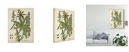 """Trademark Global Johann Weinmann Weinmann Tropical Plants I Canvas Art - 15"""" x 20"""""""