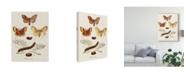 "Trademark Global Johann Esper Life Cycle of a Moth I Canvas Art - 15"" x 20"""