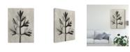 "Trademark Global Karl Blossfeldt Ua Ch Blossfeldt Botanical I Canvas Art - 15"" x 20"""