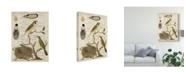 "Trademark Global Vision Studio Avian Journal II Canvas Art - 20"" x 25"""