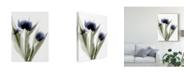 "Trademark Global Judy Stalus Xray Tulip IV Canvas Art - 20"" x 25"""