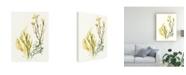 """Trademark Global June Erica Vess Kelp Collection II Canvas Art - 20"""" x 25"""""""
