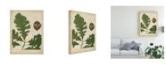 """Trademark Global John Torrey Oak Leaves and Acorns III Canvas Art - 15"""" x 20"""""""