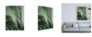 "Trademark Global Incado Close up X Canvas Art - 36.5"" x 48"""