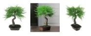 Northlight Mini Maple Artificial Bonsai Tree in A Pot