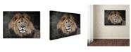 "Trademark Global Jai Johnson 'Male Lion Portrait 1' Canvas Art - 19"" x 14"" x 2"""