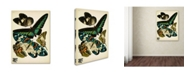 """Trademark Global Vintage Apple Collection 'Papillons 10' Canvas Art - 19"""" x 14"""" x 2"""""""