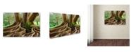 "Trademark Global Mike Jones Photo 'Roots Sarasots Big Tree' Canvas Art - 19"" x 12"" x 2"""