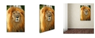 "Trademark Global Mike Jones Photo 'Lion' Canvas Art - 47"" x 30"" x 2"""