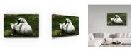 "Trademark Global Robert Michaud 'Trumpeter Swan' Canvas Art - 47"" x 30"" x 2"""