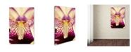 "Trademark Global PIPA Fine Art 'Antiqued Iris' Canvas Art - 16"" x 24"""