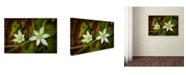 "Trademark Global PIPA Fine Art 'Wild Beauty' Canvas Art - 16"" x 24"""