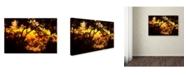 "Trademark Global Mark Ashkenazi 'Img 8483' Canvas Art - 16"" x 24"""
