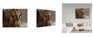 "Trademark Global Ron Parker 'Winter Pine Downy Woodpecker' Canvas Art - 18"" x 24"""