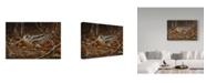 "Trademark Global Wilhelm Goebel 'Woodcock In Hiding' Canvas Art - 16"" x 24"""