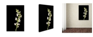 "Trademark Global PIPA Fine Art 'White Snapdragons Against Black Background' Canvas Art - 22"" x 32"""