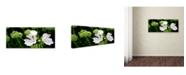 "Trademark Global Kathie McCurdy 'White Mallow' Canvas Art - 32"" x 16"""