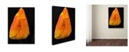 "Trademark Global Kurt Shaffer 'Perfect Red and Yellow Tulip' Canvas Art - 47"" x 30"""