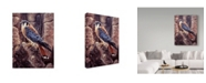 "Trademark Global Jeff Tift 'Kestral' Canvas Art - 14"" x 19"""