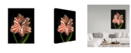 "Trademark Global Susan S. Barmon 'Red And White Amaryllis 2' Canvas Art - 18"" x 24"""