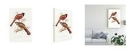 "Trademark Global John Gould Tropical Trogons IV Canvas Art - 15.5"" x 21"""