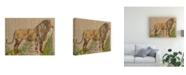 "Trademark Global Chariklia Zarris Animals Canvas Art - 27"" x 33.5"""